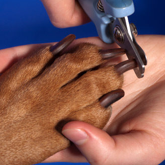 Blue Ribbon Grooming Sault Ste. Marie Nail Clipping